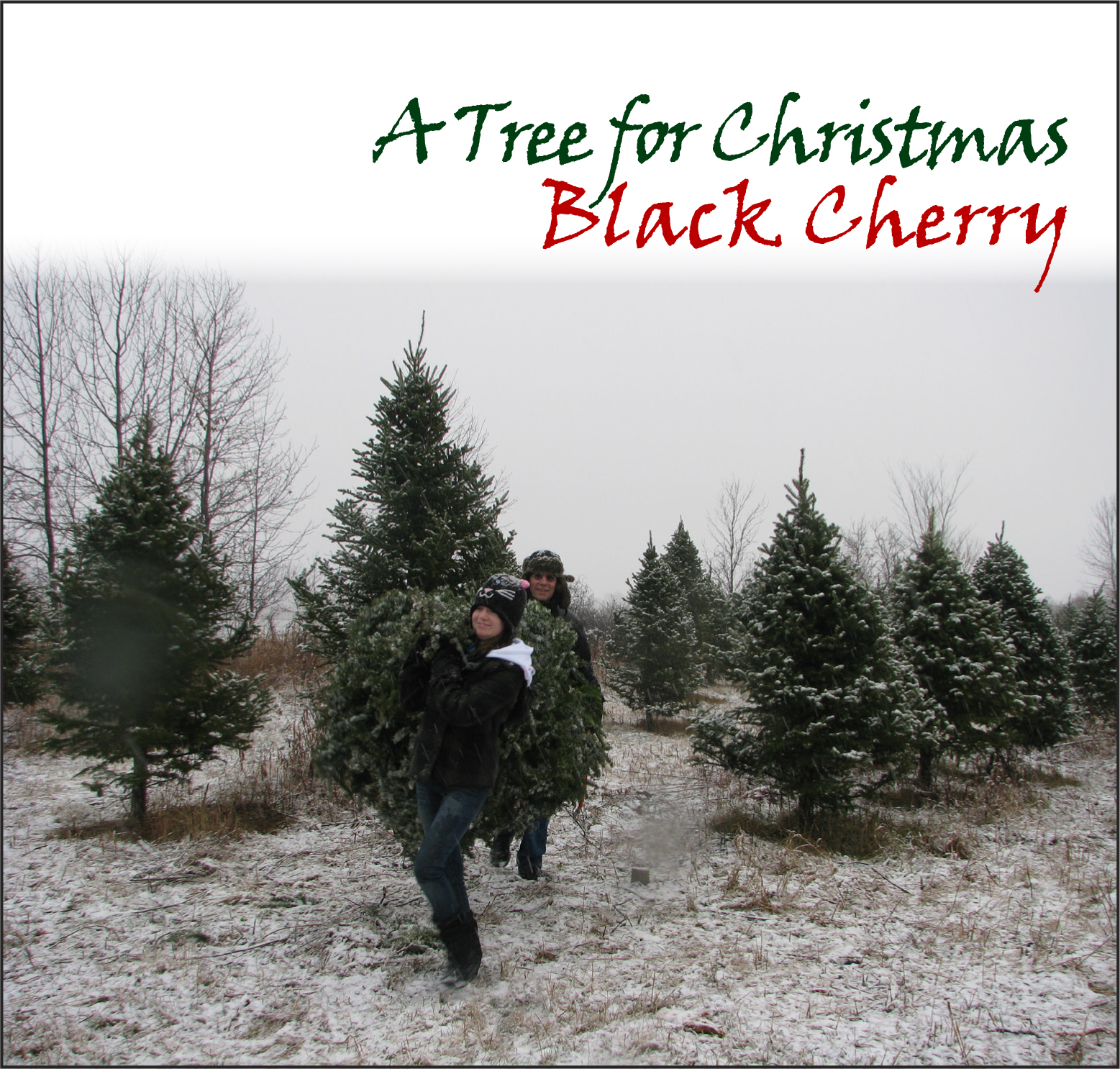 Black Cherry - A Tree For Christmas